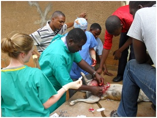 TAWESO vets working