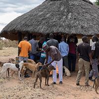 World Rabies Day 2018 ved GARC - Dyrlæger uden Grænser