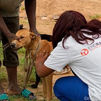 World Rabies Day ved GARC - Dyrlæger uden Grænser