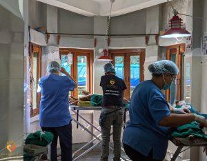 Dharamsala i Indien kæmper mod rabies gennem ABC-kampagner